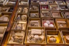 caso de demostración en museo de la historia natural con los huevos Fotos de archivo libres de regalías