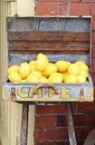 Caso del vintage de limones Imagen de archivo libre de regalías