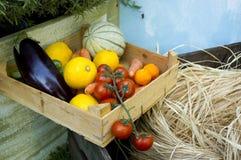 Caso di verdure biologico Fotografia Stock Libera da Diritti