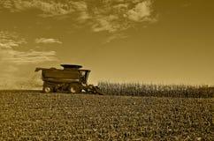 Caso IH che raccoglie cereale Fotografie Stock Libere da Diritti