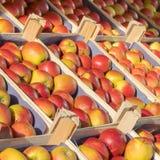 Casos con las manzanas en una mercado de la fruta Imágenes de archivo libres de regalías