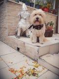 Casper-Sohn bahar sonbahar bahçe De Lizenzfreie Stockfotografie