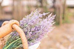 Caspia for Filler Flowers Stock Images