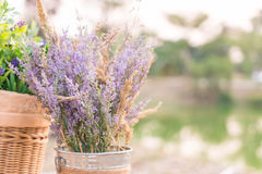 Caspia for Filler Flowers Royalty Free Stock Photos