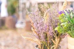 Caspia for Filler Flowers Stock Photos