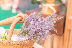 Caspia for Filler Flowers Royalty Free Stock Images