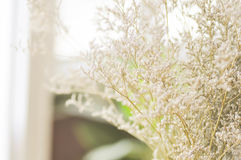 Caspia flowers in vase Royalty Free Stock Photography