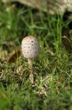 Casquillo de la seta debajo de la hierba Imagen de archivo