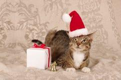 Casquillo de Papá Noel del gato de la Navidad Foto de archivo