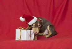 Casquillo de Papá Noel del perrito del perro de la Navidad Fotos de archivo libres de regalías