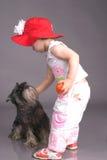 Casquillo rojo y el lobo gris Imagen de archivo libre de regalías