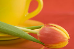 Casquillo y tulipán amarillos Imagen de archivo