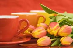 Casquillos y tulipanes del color Imagen de archivo libre de regalías