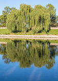 Cass River, Heritage Park, Frankenmuth, Michigan. Willow trees reflecting in the Cass River, near Heritage Park, Frankenmuth, Michigan Stock Photo