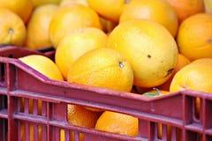Cassa degli aranci Immagine Stock