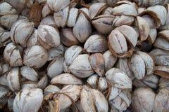 Cassa della noce di cocco Immagine Stock Libera da Diritti