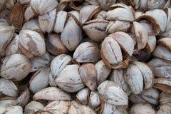 Cassa della noce di cocco Fotografia Stock