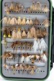 Cassa della scatola della mosca asciutta Fotografia Stock Libera da Diritti