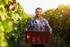 Cassa della tenuta dell'agricoltore dell'uva Immagine Stock Libera da Diritti