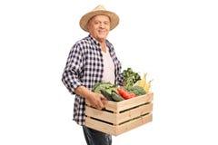 Cassa matura della tenuta dell'agricoltore in pieno delle verdure Immagini Stock Libere da Diritti