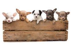Cassa in pieno dei cani immagine stock