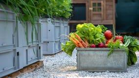 Cassa in pieno delle verdure appena raccolte Concetto organico nostrano dei prodotti Azienda agricola sostenibile immagini stock