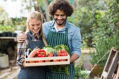 Cassa sorridente delle verdure della tenuta delle coppie Fotografia Stock