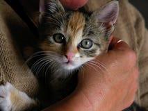 Cassaforte del gattino con la mamma Fotografia Stock