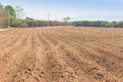 Cassava farm. Cassava planting in tropical area Stock Photography