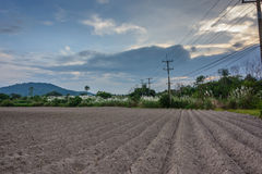Cassava farm tracks Stock Photos