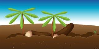 Cassava garden Royalty Free Stock Photo