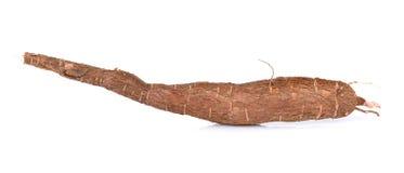 Cassava isolated on white background Stock Photography