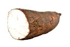 Cassava isolated on white background. Cassava yucca isolated on white background royalty free stock image