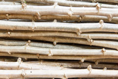 Cassava. Or manioc plant field in Thailand Stock Photos