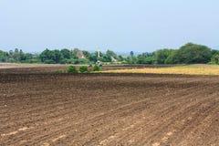 Cassava plantation. Royalty Free Stock Photography