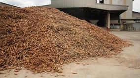Cassava prepared at tapioca flour factory Stock Photo