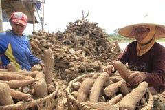 Cassava Processing Royalty Free Stock Photo