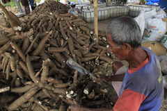 Cassava Processing. Javanese on Boyolali, Central Java, Indonesia, makes cassava or tuber to produce a flour Stock Photos