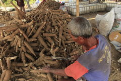 Cassava Processing. Javanese on Boyolali, Central Java, Indonesia, makes cassava or tuber to produce a flour Stock Images