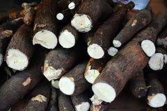 Cassava root Stock Image