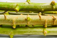 Cassava stems Stock Photography