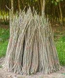 Cassava Stock Photos