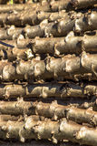 Cassava. To chop ready food to planting in Brazil Royalty Free Stock Images