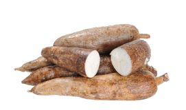 Cassava stock photo