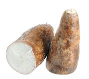 Cassava (yucca) Royalty Free Stock Photo