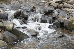 Casscading water. Water cascading in small stream in the forest Royalty Free Stock Images
