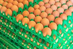 Casse con le uova fresche su un'azienda agricola di pollo organica Immagine Stock Libera da Diritti