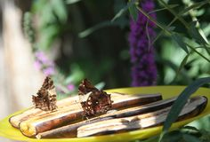 Casse-croûte de banane pour des papillons Photos libres de droits
