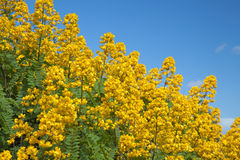 Casse de maïs éclaté photo stock