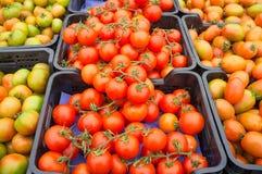 Casse dei pomodori Fotografia Stock Libera da Diritti